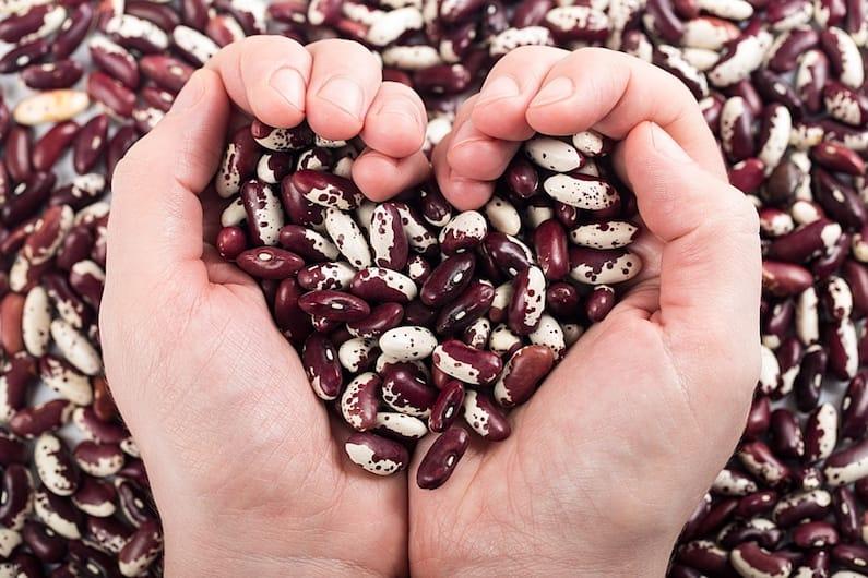 Una mano ricca di fagioli per la nutrogenomica