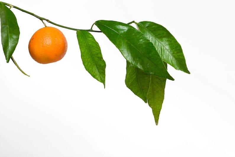 Frutta e verdura un rimedio naturale per prevenire la SLA.