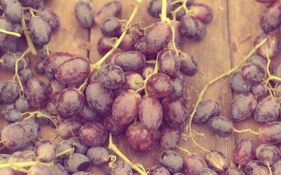 I semi di uva (estratto): benefici e proprietà